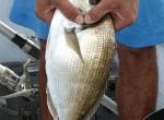 Pescar Doradas desde embarcación